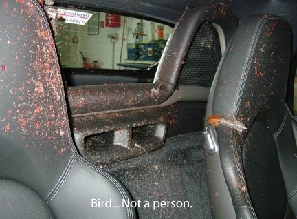 Porsche Crashed into Bird