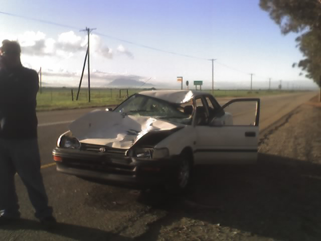 Cow crash Corolla